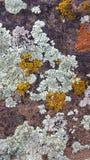 Desert Redrock with Light Green, Yellow, and Orange Lichen Patterns. Desert Redrock Sandstone with Light Green, Yellow, and Orange Complex Lichen Patterns stock photos