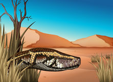 A desert with a reptile. Illustration of a desert with a reptile Royalty Free Stock Images