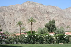 Desert Resort. Grassy area at a desert resort with Palm Trees and mountains Stock Photo