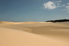 Desert and restinga. The sand dunes appear misshapen and disappear on the horizon; the vegetation of restinga remains present disputing the space Lençóis Royalty Free Stock Photos