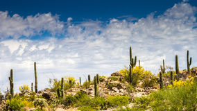 Desert Ridge. In Honeybee Canyon in Tucson, Arizona royalty free stock photos