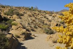 Desert River Bed at National Park Stock Image