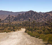 Desert Road. In Joshua Tree National Park stock photo