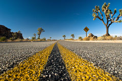 Desert road. A low shot of a road in a Joshua Tree Park Stock Image