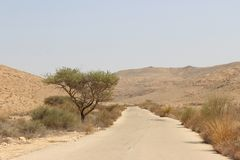 Desert road. A desert road with tree and bushes on the side of the road Royalty Free Stock Image