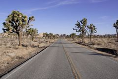 Desert Road and Joshua trees Stock Photos
