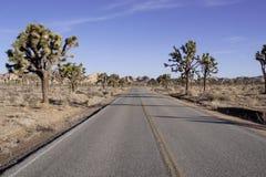 Desert Road and Joshua trees Stock Photos