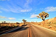 Desert Road with Joshua Trees in the Joshua Tree National Park Stock Photo