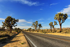 Desert Road with Joshua Trees in the Joshua Tree National Park Royalty Free Stock Photography
