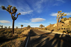 Desert Road with Joshua Trees in the Joshua Tree National Park Stock Photo