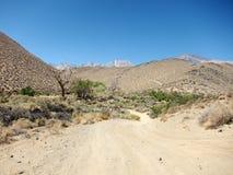 Desert road landscape Stock Photo