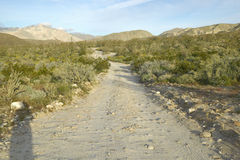 Desert road in spring at Coyote Canyon, Anza-Borrego Desert State Park, near Anza Borrego Springs, CA Stock Photos