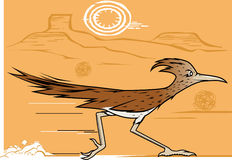 Desert Roadrunner Stock Images