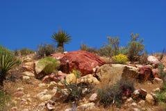 Desert Rock Garden Royalty Free Stock Photography
