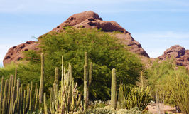 Desert Rock Hill Royalty Free Stock Image