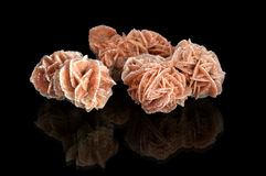Desert Rose Royalty Free Stock Photos