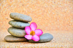 Desert Rose Flower. On the stone to the spa Royalty Free Stock Image