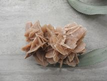 Desert Rose on a gray background and the green leaves of a flower royalty free stock photography