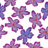Desert Rose lilac flower. Seamless pattern. Sketch on a white ba Royalty Free Stock Images