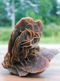 Desert rose mineral Stock Image