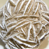 Desert rose rosette crystal closeup Stock Photography