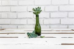 Vintage green glass bottle and desert rose Stock Photo