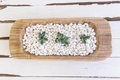 Desert rose on white pebbles inside a wooden bowl Stock Photo