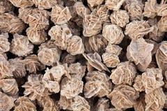 Desert roses Stock Image