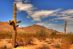 Desert Saguaro 34. Saguaro cactus in the winter Arizona desert Royalty Free Stock Photography
