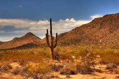 Desert Saguaro 46 Stock Photo