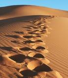 Desert Sahara Royalty Free Stock Photography