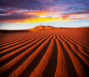 Desert. Sahara desert Royalty Free Stock Photos