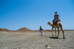 Through the desert Sahara man on a camel Stock Images