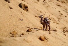 Desert. Sand camel heat summer Africa yellow wind dune speck animal stock photography