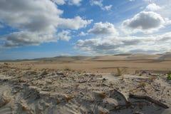 Desert Sand Dune Stock Images