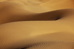 Desert sand dunes. Sand dunes in the Sahara desert in morning light Royalty Free Stock Photography