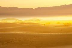 Desert Sand Dunes with golden light and fog Stock Image