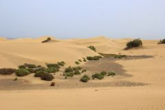 Desert sand dunes in Gran Canaria Royalty Free Stock Photography