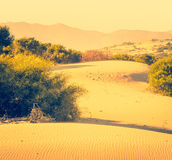 Desert sand dunes Stock Photo