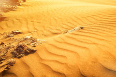 Desert sand dunes. Red and yellow desert sand dunes texture royalty free stock images