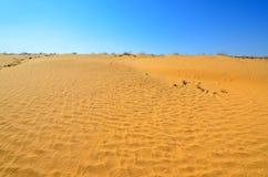 Desert sand dunes. Rippled sand dunes under blue sky, southern Negev Desert, Israel Royalty Free Stock Photography