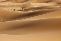 Desert sand dunes in the Sahara. Desert sand dunes in daylight in the Sahara Royalty Free Stock Images