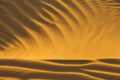 Desert sand in evening sun Stock Images