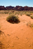 Desert sand with footprints Royalty Free Stock Photography