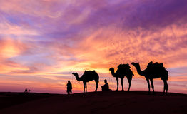 Desert scence with camel and dramatic sky. Rajasthan desert with dramatic sky with camel and man stock image