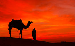 Desert scence with camel and dramatic  sky Royalty Free Stock Photography