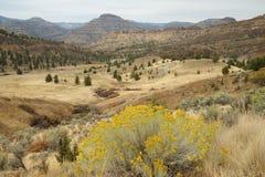 Desert scene Stock Photography