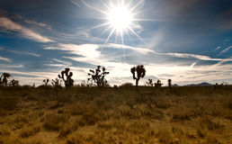Desert scene Royalty Free Stock Images