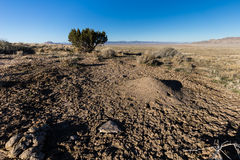 Desert scene with ant hill and mud. This photo was taken in the West Desert of Utah near the Simpson Spring Pony Express Station Stock Photo