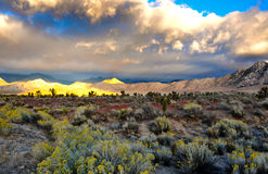 Desert Scene in Fall. Colors and overcast sky Royalty Free Stock Photos